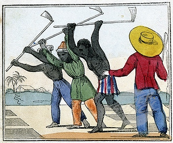 Esclavos negros trabajando en campos de caña